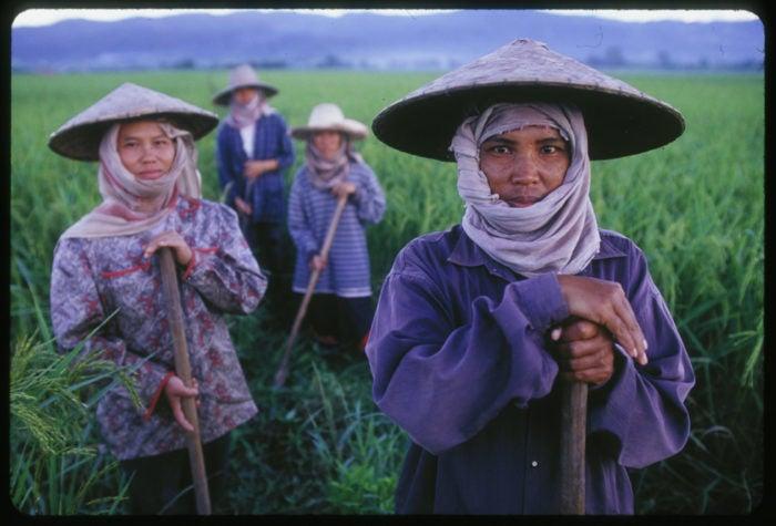 Female farmers working in the field.