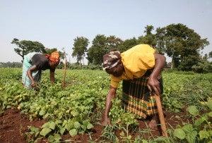 Female farmers working in a field in Africa.