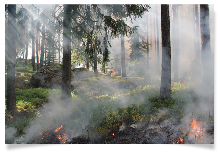 Snapshot of a forest fire.