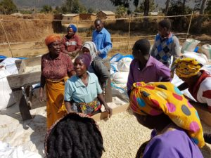 Villagers filling bags with tharaka cereal.