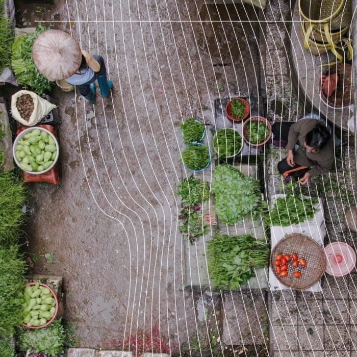 View of a garden.
