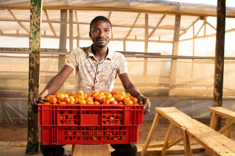 A farmer delivers a crate of tomatoes to the Farmers' Service and Agrobusiness Centre in Shika.