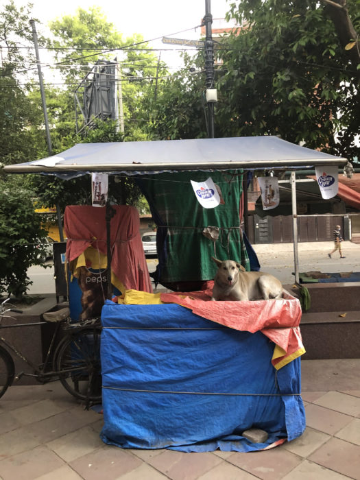 Dog sitting on a street cart.