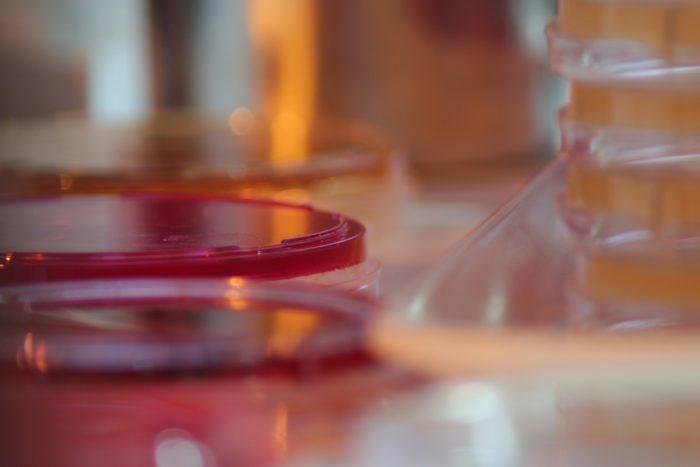 Test tube and petri dish.