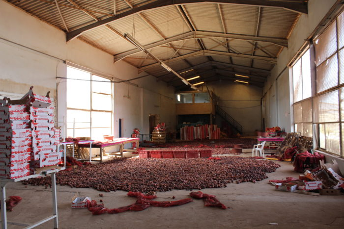 A warehouse covered with fruit on the ground.