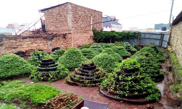 Innovative urban farming through vertical gardening in open spaces in Nairobi. Photo credit- Mwengenye Lifestyle CBO