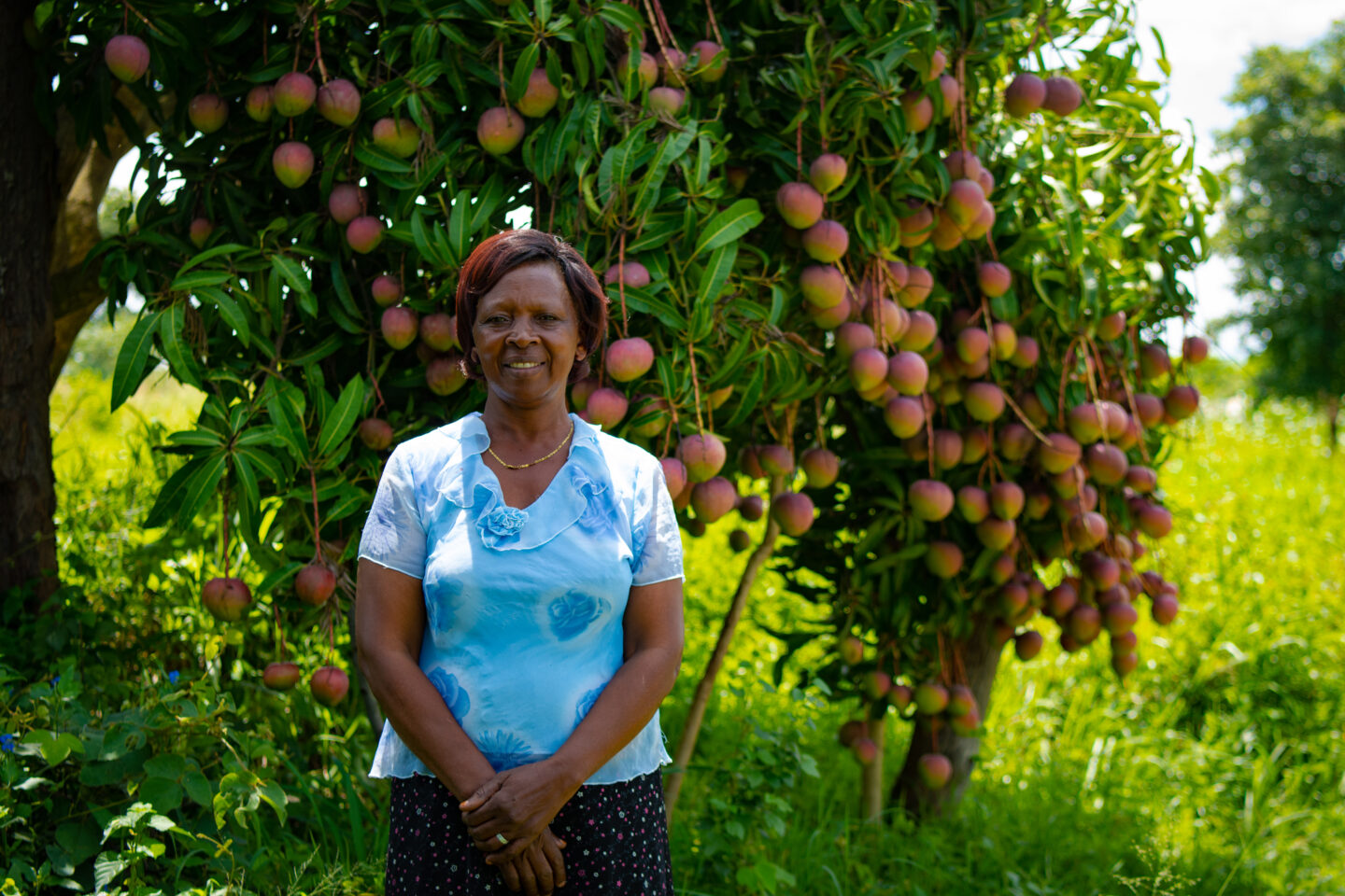 Elizabeth Muia began growing mangoes in 2008 on her farm in Kyumu village, Machakos County. Photo credit: Paukwa House