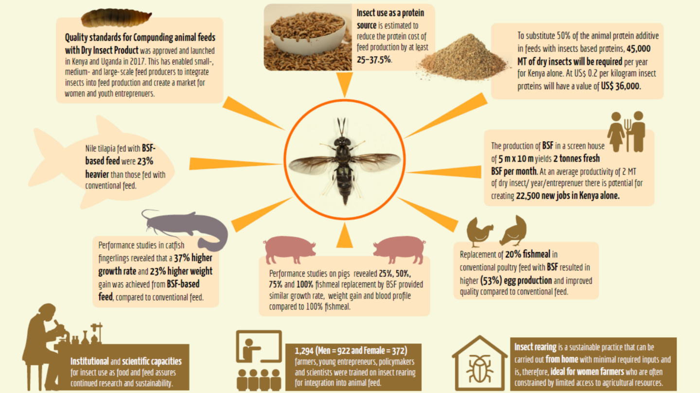 infographic on insects and farming/ agriculture