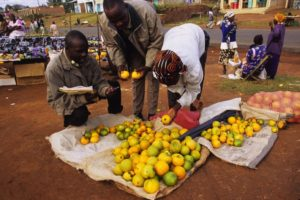 Three people inspecting mangoes in an African market