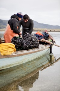 Fisherman extracting mussels onto their boat at the Valdivia Coastal Reserve in Chile.