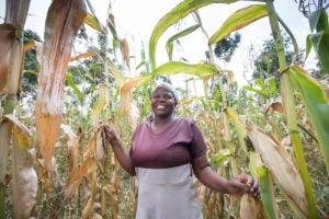 Woman harvesting vegetables in the field.