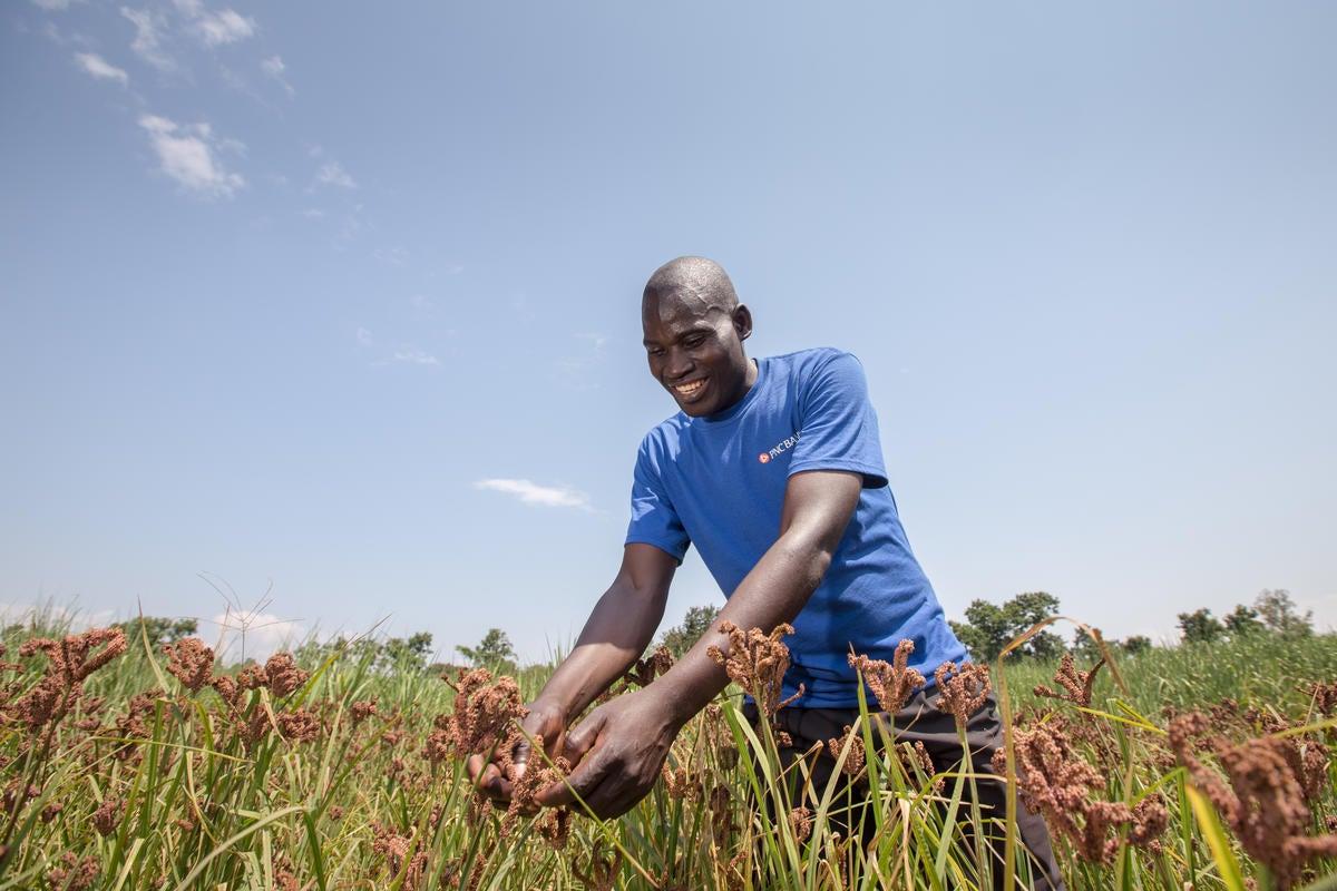 Man harvesting vegetables in the field.