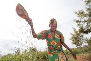 Older woman harvesting produce.