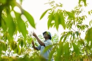 Farmer working in the field.