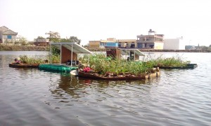 Floating island in the middle of Indore Lake used for water purification.