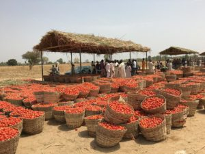 Baskets of tomato at an outdoor market.