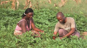 Man and a woman working in a field in Africa as part of the AGRA initiative.
