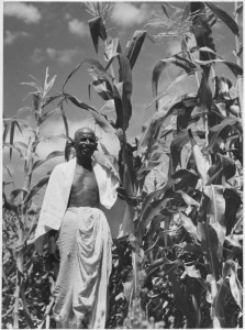Indian farmer at work in the field.