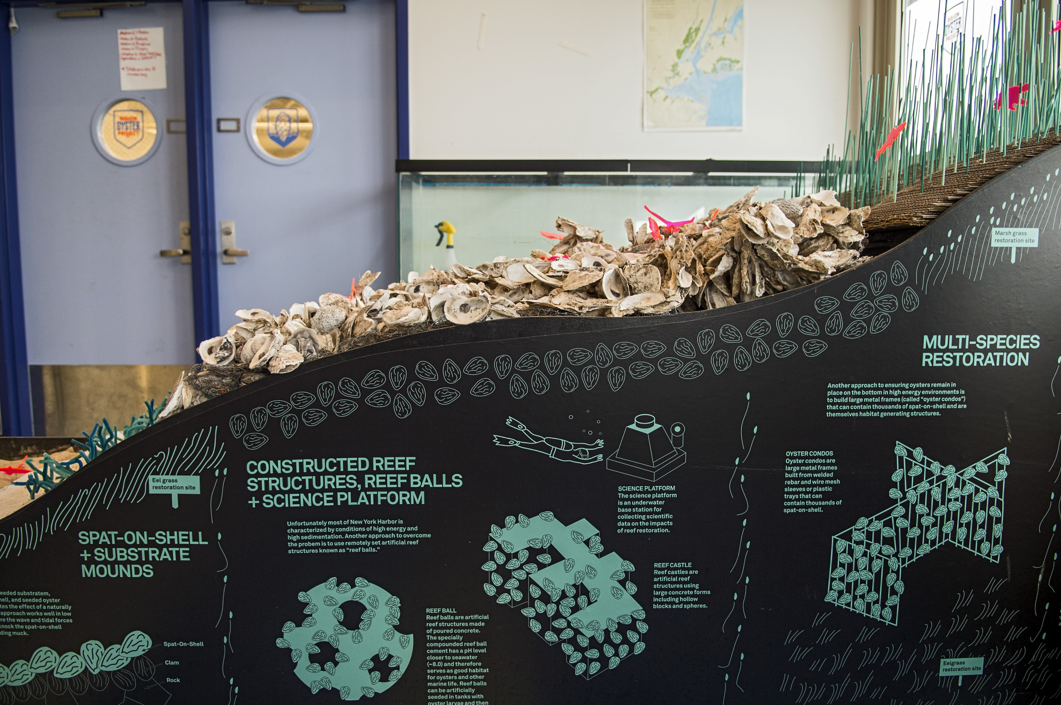 Oyster Reef Model in the Harbor School