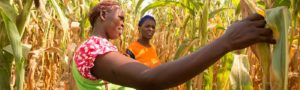 Joyce Anyango Otieno giving Caroline Atieno advice on the best maize farming practices at her farm in Siaya County, Kenya.