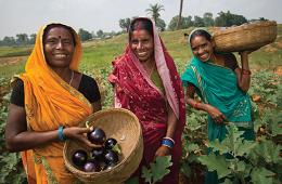 Women harvesting produce in a field.