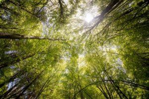Sunlight filtering through the trees.