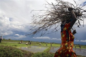 Woman carrying branches in a marshy field.