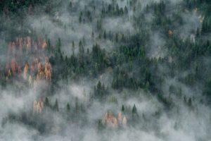 Forest engulfed in fog.