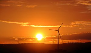 Field filled with wind turbines at sunset.